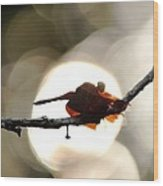 Dragonfly Bathing In Sunset Wood Print
