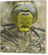 Dragonfly Close-up Wood Print