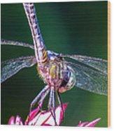 Dragonfly Close Up Wood Print