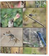 Dragonfly Collage 3 Wood Print