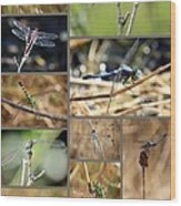 Dragonfly Collage Wood Print