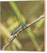 Dragonfly - Common Green Darner Wood Print
