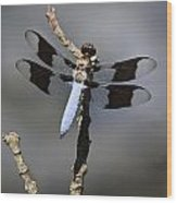 Dragonfly Common Whitetail Wood Print