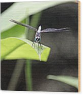 Dragonfly Dimensions Wood Print
