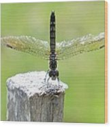 Dragonfly Doing A Handstand Wood Print
