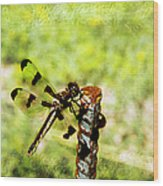 Dragonfly Eating Breakfast Wood Print