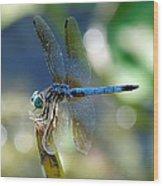 Dragonfly Elegance Wood Print