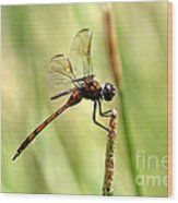 Dragonfly Gold Wood Print