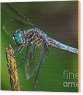 Dragonfly Having Summer Fun Wood Print