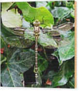 Dragonfly In An English Garden Wood Print