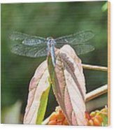 Dragonfly In Early Autumn Wood Print