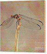 Dragonfly In Fantasy Land Wood Print