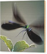 Dragonfly In Flight Wood Print