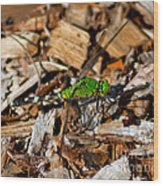 Dragonfly In Mulch Wood Print