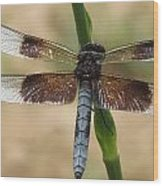 Dragonfly In Summer Wood Print
