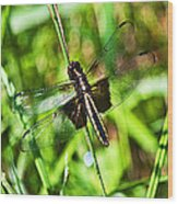 Dragonfly Ins 22 Wood Print