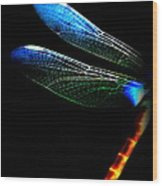 Dragonfly - Insect  7128-005 Wood Print