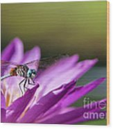 Dragonfly Macro On A Water Lily Wood Print