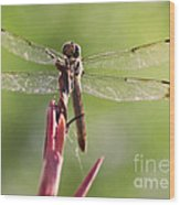 Dragonfly Macro On Top Of A Flowering Plant Wood Print