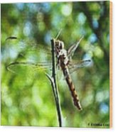 Dragonfly Magic Wood Print