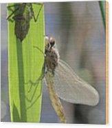 Dragonfly Metamorphosis - Eighth In Series Wood Print