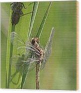 Dragonfly Metamorphosis - Eleventh In Series Wood Print