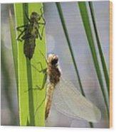 Dragonfly Metamorphosis - Seventh In Series Wood Print