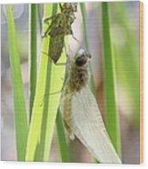 Dragonfly Metamorphosis - Sixth In Series Wood Print