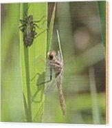 Dragonfly Metamorphosis - Tenth In Series Wood Print