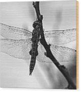 Dragonfly Mosaic Wood Print