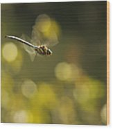 Dragonfly No 2 Wood Print