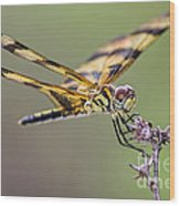 The Halloween Pennant Dragonfly Wood Print