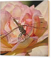 Dragonfly On A Rose Wood Print