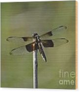 Dragonfly On A Stick Wood Print