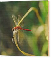 Dragonfly On A Summer Day Wood Print