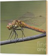 Dragonfly On A Wire Wood Print