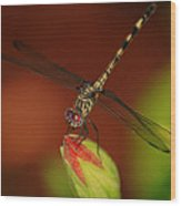 Dragonfly On Hibiscus Wood Print
