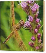 Dragonfly On Liatris Wood Print