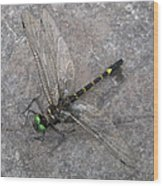 Dragonfly On Rock Wood Print