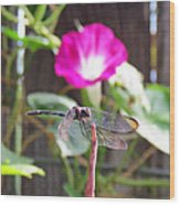 Dragonfly On Watch Wood Print by Walter Klockers