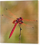 Dragonfly Paintings Wood Print