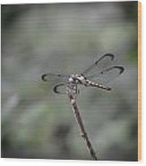 Dragonfly Perched Wood Print