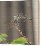 Dragonfly Profile Wood Print