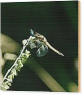 Dragonfly Resting In The Wind  Wood Print