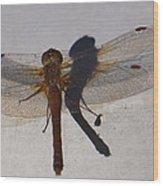 Dragonfly Sees Itself Shadowed II Wood Print