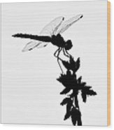 Dragonfly Silhouette Wood Print