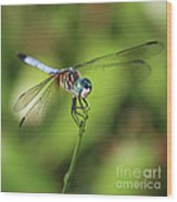 Dragonfly Square Wood Print