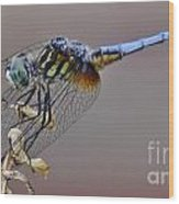 Dragonfly Stance Wood Print