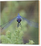Dragonfly Wood Print by Susan Sidorski