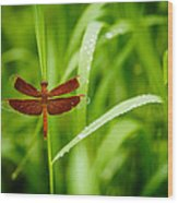 Dragonfly Waits Wood Print